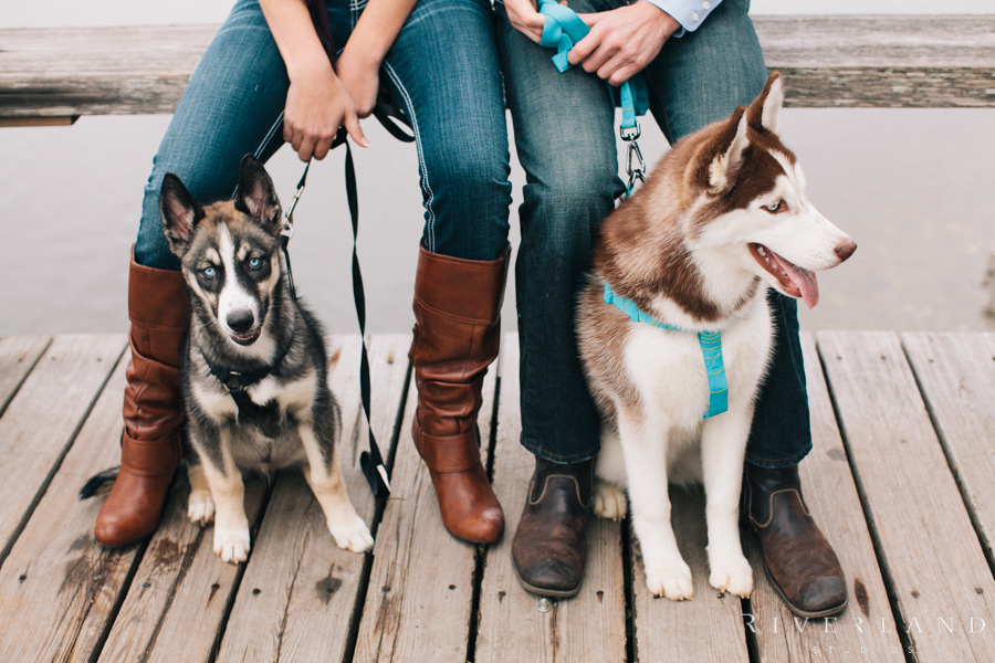 Dogs at Engagement Shoot